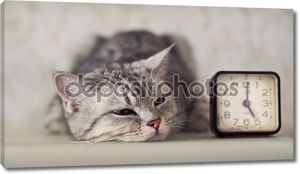 кошка с часами