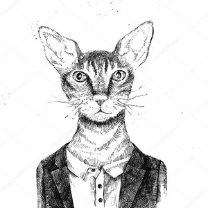 Битник кошка, одетый в урбанистическом стиле