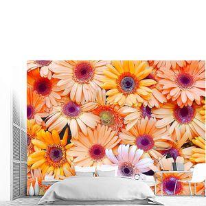 Гербера цветок стены