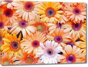 Стена цветов герберы