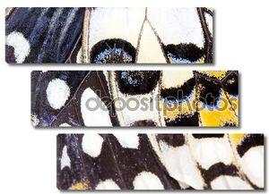 Крылышко бабочки