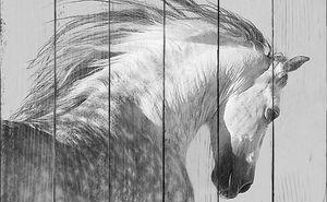 Голова пегого коня