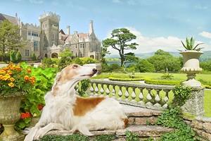 Прекрасная собака на фоне замка