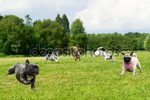 Мало собак в парке
