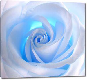 Бутон голубой розы крупно