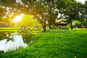 Зелёная поляна в парке