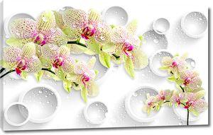 Зеленые орхидеи с кольцами
