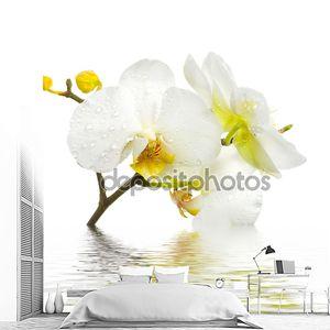 свежие орхидеи