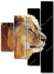 Портрет льва на черном фоне