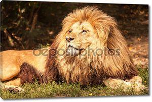 Лев на траве