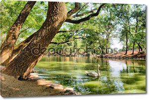 озеро с белых лебедей