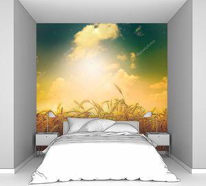 Тревожное небо над пшеничным полем