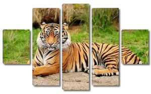Портрет тигра горизонтальные