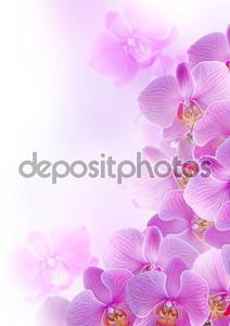 Розовые орхидеи на размытом фоне