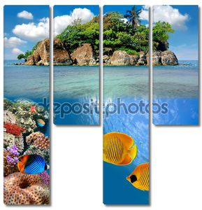 Фото коралловые колонии на вершине рифа