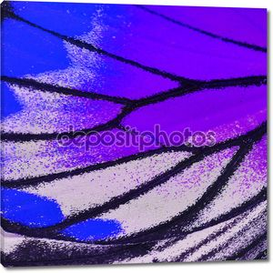 Крыло бабочки