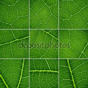 набор зеленый стола. дубовый лист крупным планом, супер макро.
