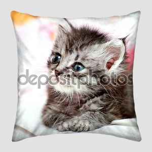 Маленький серый кот