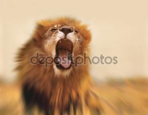 Львиный рев