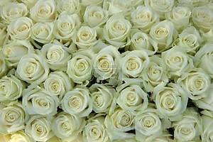 Свадебный букет роз