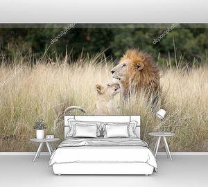 Парочка львов в густой траве