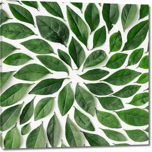 Зеленые листья в форме спирали