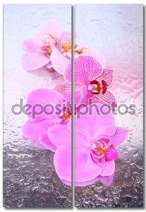 Тропические цветки орхидеи
