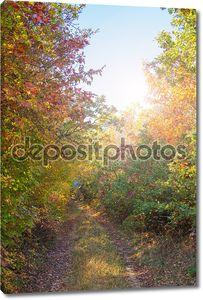 Путь в лесу.