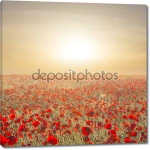рано утром красное Маковое поле
