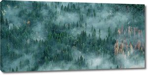 Туман окутал  хвойный лес