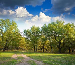 Дубовый лес осенью