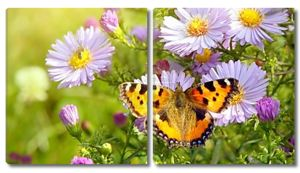 Бабочка на цветах