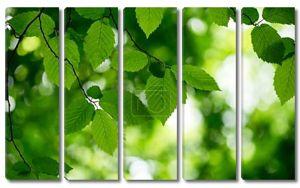 Фон из зеленых листьев