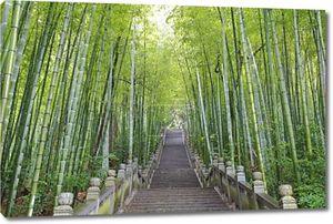 Живописные альпинист шаг лестнице рядом с бамбуковый лес