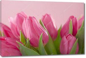 Цветы тюльпана на розовом фоне