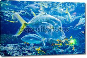 рыбы соленой воды в океане или аквариум