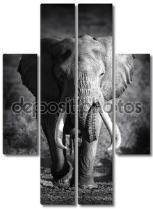 бык слона (артистическая обработка)