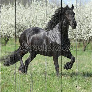 Фризская Маре напротив цветущих деревьев сливы