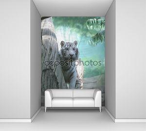 Белый тигр в индийских джунглях