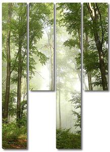 Весенний буковый лес в тумане