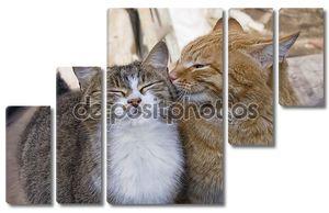 Любовь пара кошек