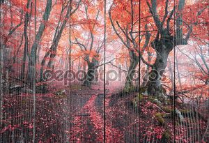 Красивая магический Красный лес в тумане осенью. Сказочный пейзаж