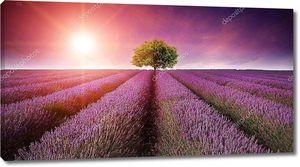Пейзаж поле лаванды лето закат с одного дерева