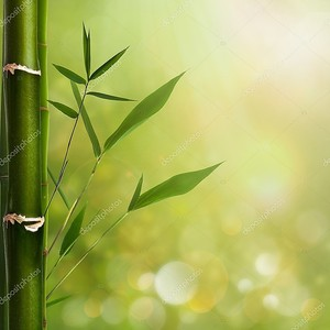 Естественный фон Дзэн с листьев бамбука