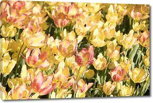Яркие, красивые Цветущие тюльпаны