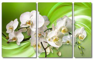 Орхидеи на зеленом