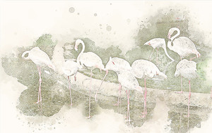 Стая белых фламинго