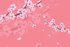 Розовый фон, Сакура