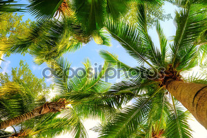 Пальмовые деревья