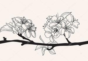 Декоративные вишни